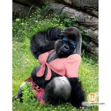 hahahaha gorilla mahoo!!!! wow nya ya!!!!!