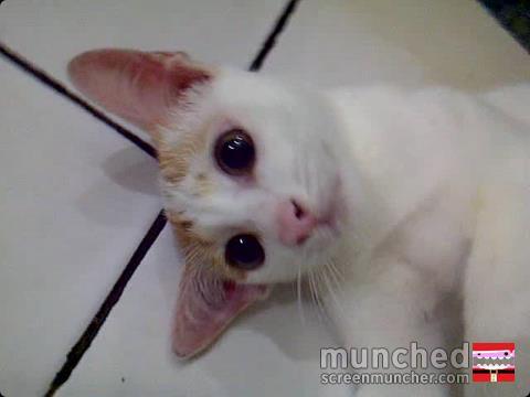 ih lucu ya kucingnya.. :D gemes deh liatnya.. xD.. wownya ya :)