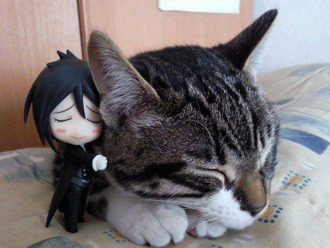 cute gx nih kucing gw ,persis kayak gw lho ,bhahahaha sibastian dan kucing mungil membuat gw merinding ,gemes buaaaaaaaaaaaanget