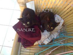 <<<<<<<ITACHI&SASUKE>>>>>>>>>