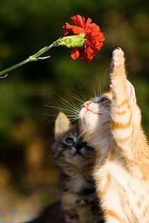 Nabi menekankan di beberapa hadisnya bahawa kucing itu tidaklah najis. Malah diperbolehkan untuk berwudhu menggunakan air bekas minum kucing kerana dianggap suci. Diriwayatkan dari Dawud bin Shalih At-Tammar dan ibunya yang menerangkan bahwa
