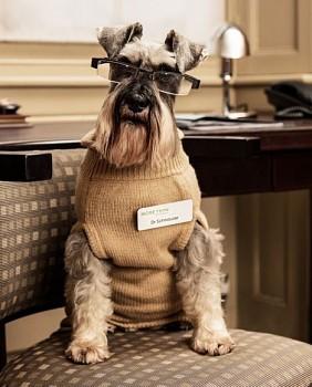 Tentunya Anda telah sering mendengar tentang terapi dengan menggunakan anjing. Namun pernahkah Anda mencoba sebuah terapi dengan anjing sebagai sang terapis? Sebuah survey yang dilakukan menunjukkan bahwa 85% pemilik anjing atau kucing membica