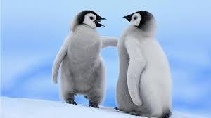 tebak pinguin yang sebelah kiri lagi ngomong apa?