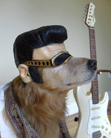 Anjing ini di make up ala Elvis Presley