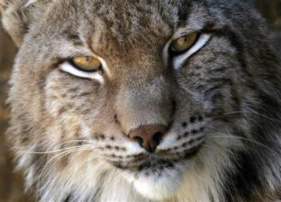10 hewan yg paling langka di dunia
