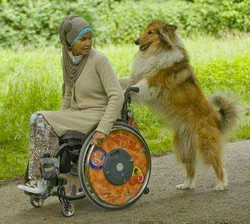 Image Result For Ada Service Dogs