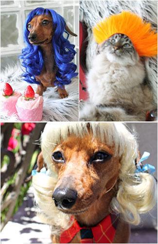 Lucunya, Wig Anjing yang Terinspirasi dari Rambut Katy Perry Hihihiihi