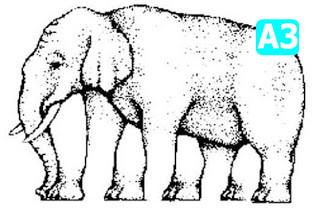 Ada berapah sebenarnya kaki gajah digambar ini ??