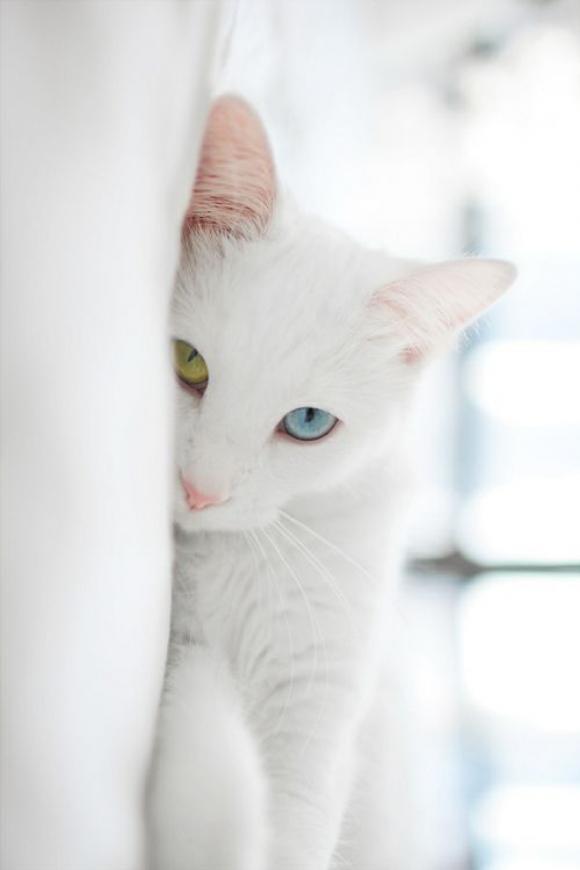 Kucing mata belang.. mirip matanya Yuna FFX