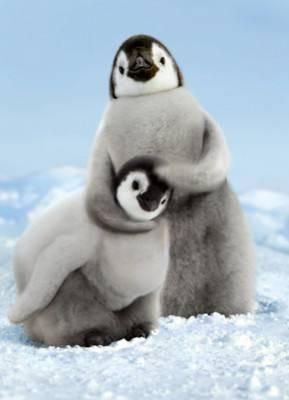 Pinguin lucu Klik wow kalo kamu gemes :)