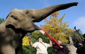 keren ternyata gajah gosok gigi jg y, jangan lupa WOWnya Y
