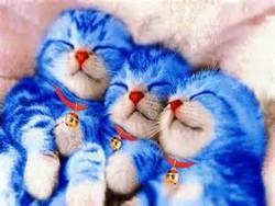 wow,lucunya kucing ini,kucing ini mirip doraemon yaa!!!.. wow nya dong untu kucing lucu ini