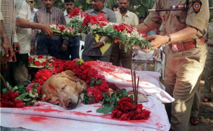 Zanjeer, anjing penyelamat ratusan jiwa di India pada tahun 1993, dia berhasil menemukan lebih dari 3000 kg bahan peledak, 600 detonator, 240 granat, 6400 peluru selama masa hidupnya. Anjing ini akhirnya mati dan di bakar dgn penuh kehormatan.