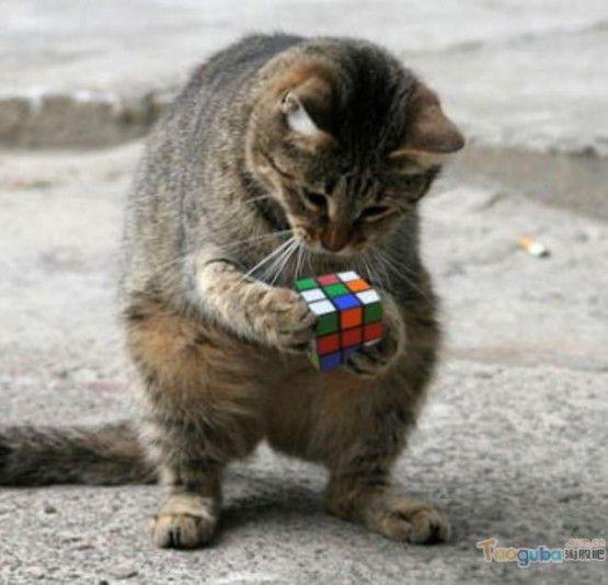 Kira-kira ni kucing bisa gak jadiin tu rubik? Klik wow nya y!