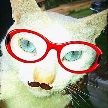 FOTO LUCU, FOTO UNIK. Kucing ini memiliki mata yang unik!!! ini foto asli yang ku ambil pakai hp. kalo yang kacamata dan kumisnya itu editan gan....... Kucing ini ku foto waktu mudik ke Lampung.......