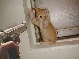 hahaha ni kucing lucu banget minta wow dong