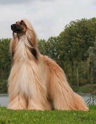Cantik... Tapi Anjing...