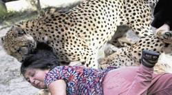 Istri Diterkam Cheetah, Suami Sibuk Memotret