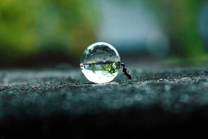 Ant Pushing A Water Droplet !