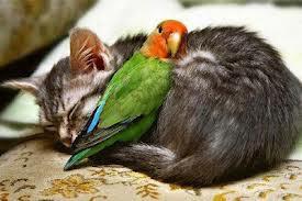 "#""Sahabat Itu Indah"" Sahabat Sejati Walaupun lain jenis :)"