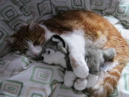 Aku mau tidur dulu ya pake boneka aku :D kasih wow nya ya untuk kucing ini