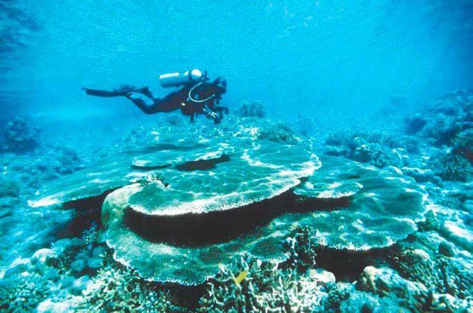 LAUT BUNAKEN LAUT TERINDAH DI DUNIA Telah menjadi ikon kuat di Manado, Sulawesi Utara, Taman Laut Bunaken adalah potensi pariwisata laut yang membahana dan menyedot perhatian dunia. Bagaikan sebuah lukisan, Bunaken menebar pesona dari sisi pant