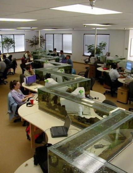 ruang kerja dengan aquarium. klo capek bisa refresh dgn liat ikan2