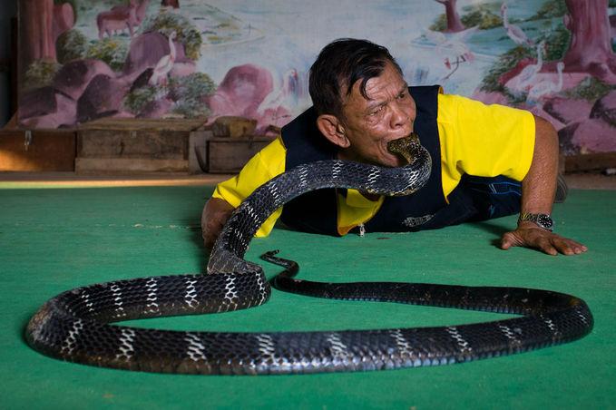 Pawang ular yang menunjukkan aksinya dengan memasukkan kepala ular kedalam mulutnya. WOOOOW
