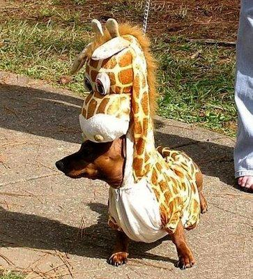 Wohoho, Im a giraffe.. ups no, Im Dog..but You can call me The dogiraffe ..wohohooh Now I can reach the tree without climb it