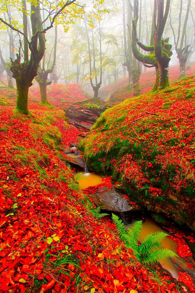 Red Forest, Cantabria, Spain...