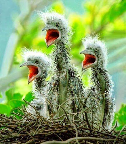 Paduan Suara La..La..la...la.....la....laaaaa.. Unik yah.... Twitter: @BrothersDhimas @Quest_Indonesia FB: Question Indonesia