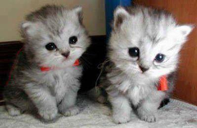 Lucu Imut Dan Manisnya 2 Kucing Iniyang Setuju Wow Nya Ya