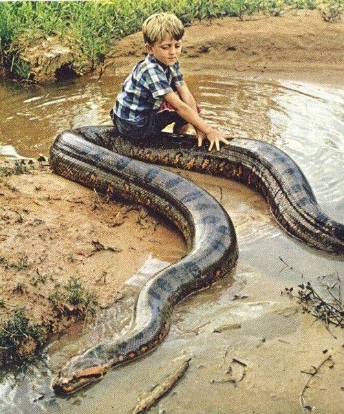 Nih anak udah sedeng kali ya.. Anaconda pake didudukin.. Ditelen coba, Tahlilan 7 hari mak bapak lu!