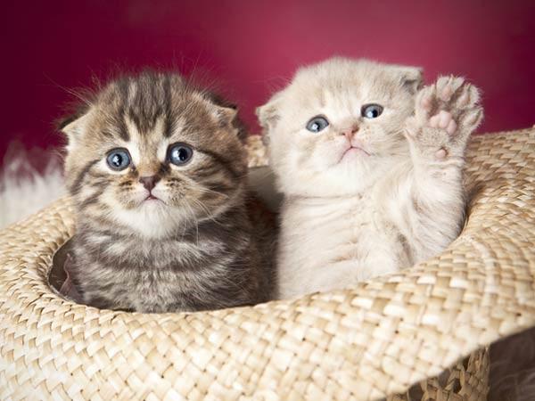 mew...meow.... sapa yg mau ngadopsi aq??? mew...