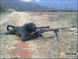 MONYET , Sudah Tidak Asing Lagi Bagi Manusia , Monyet Yang Biasanya Untuk Pertunjukan Di Kebun Binatang . . . Namun Tidak Untuk Monyet Besar Yang Satu Ini , Monyet Ini Di Besarkan & Latih Oleh Militer AS , Sebagai Penembak Jitu , WooW