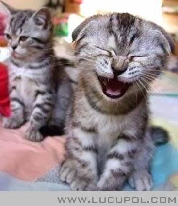 Kucing lucu lagi nyengir :D