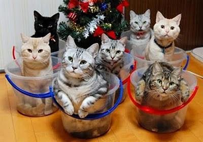 keluarga besar kucing lucu kan!!!!!