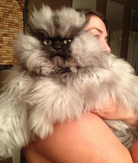 Warna bulunya yang abu-abu dan jabrik membuat Colonel Meow dijuluki sebagai kucing paling mengerikan yang ada. Akan tetapi meski penampilannya yang tak ramah, Colonel Meow memiliki banyak sekali fans di Facebook.