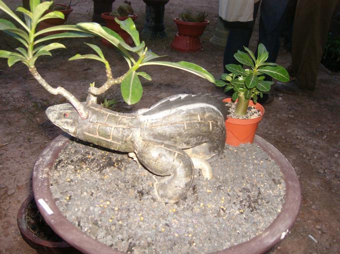 tanaman bonsai yang menyerupai bentuk hewan iguana wow nya please