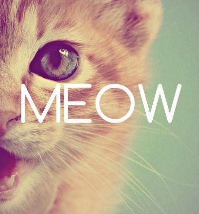 Meow.. Jgn Lupa Wow :)