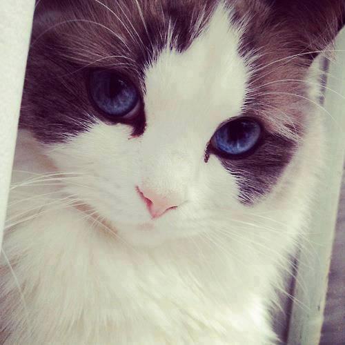 mana WOW buat kucing Lucu in? ^ ^