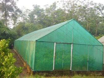 Screen House untuk menanam jeruk yang unggul,, Purworejo-Jateng CV.Wahyu Tani Putra