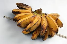 Sblm wanita menikah, disarankan jgn terlalu byk makan pisang jenis pisang ambon, krn jenis pisang tsb punya zat yg mmbuat libido mjd tinggi.
