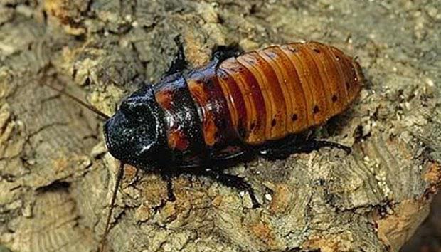 Fosil Kecoa Berusia 49 Juta Tahun
