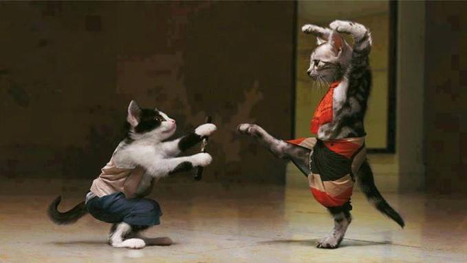 kunfu meow