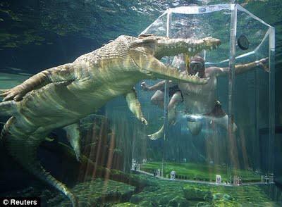 7 Binatang Laut Paling Berbahaya di Dunia