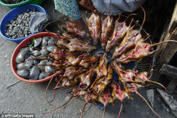 Beginilah proses pembuatan sate tikus yang terkenal di Vietnam. Mari kita tengok. hi
