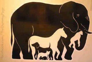 Test IQ nih mber Ada berapakah jumlah Ekor yang ada pada hewan pada gambar berikut ini? Ayo yang ngaku cerdas.... Semuanya Dijawab ya