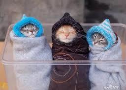 Kucing Lucu and imuttt :)
