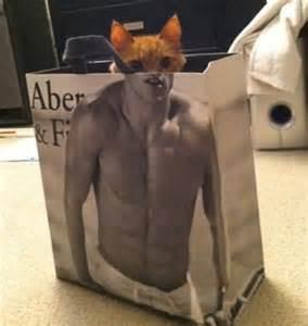 Lihat kucing lucu ini :D Dia keluar dari kantong belanjaan yang bergambar pria six pack :D WOW ny